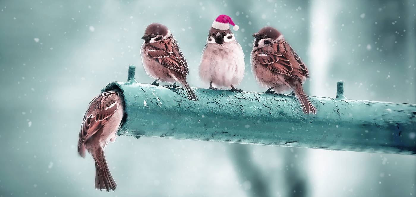 Weihnachtsgrüße von Bernhard Dobler